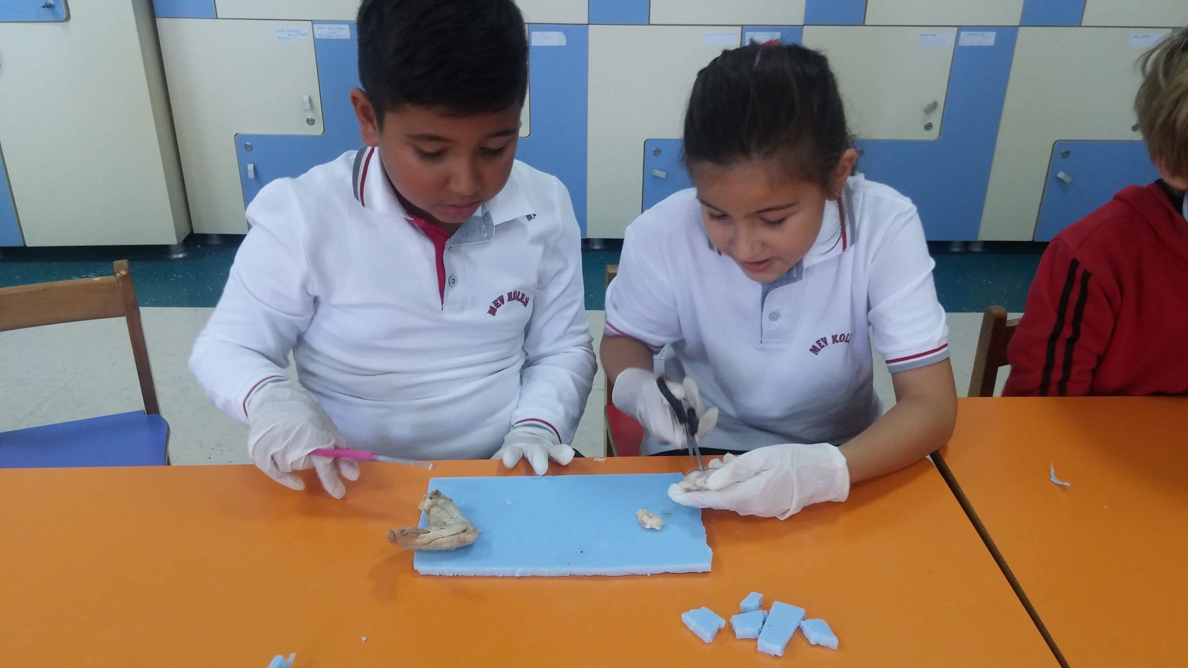 4-A ve 4-B Sınıfı Öğrencilerimiz Kemik ve Kasların Yapısını İncelediler