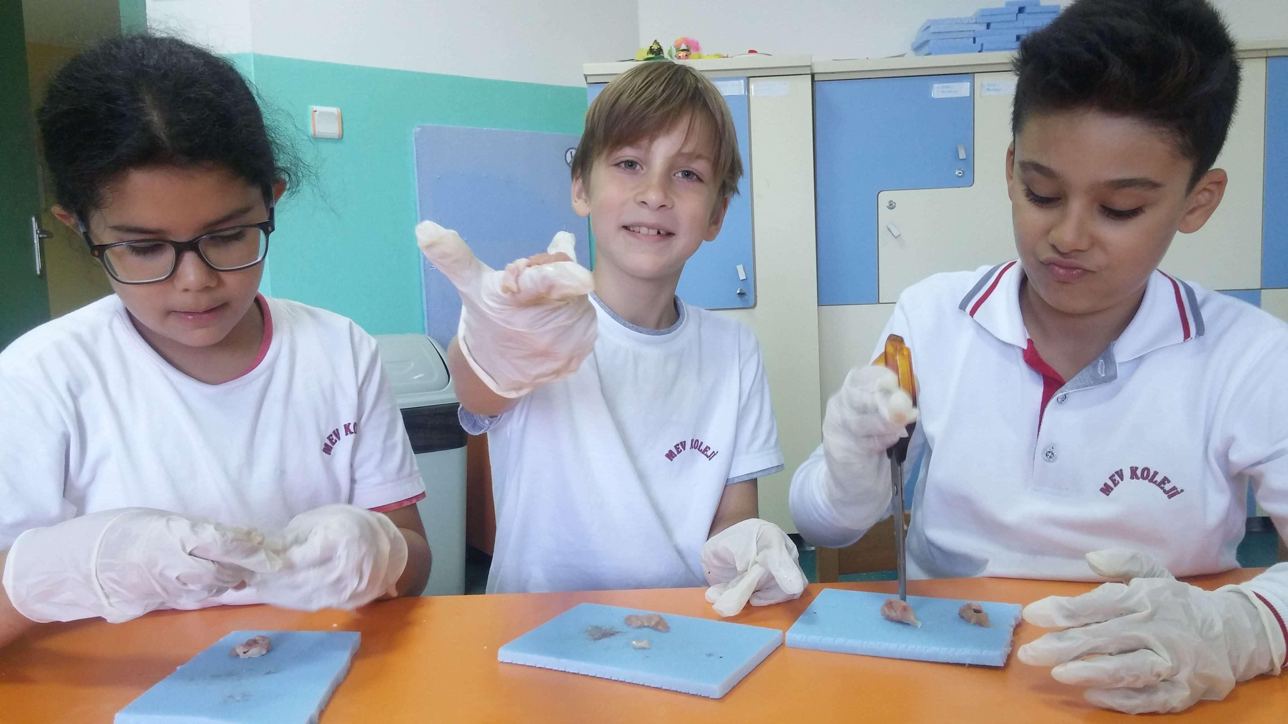 4-C ve 4-D Sınıfı Öğrencilerimiz Kemik ve Kasların Yapısını İncelediler